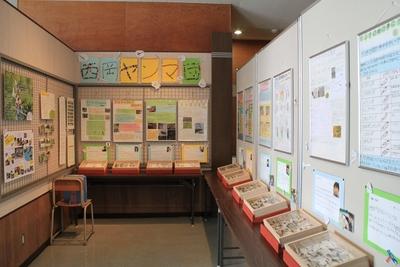 西岡公園自然調査報告展@さけ科学館