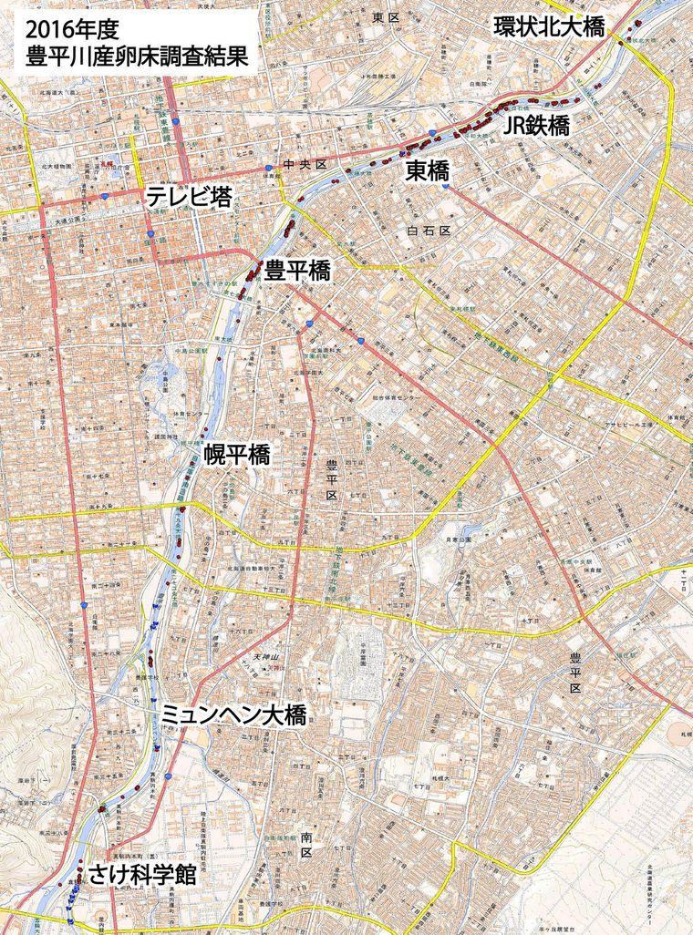 2016年度豊平川サケ産卵床調査結果