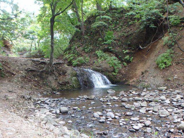 精進川の滝の下にもサクラマスは見えず