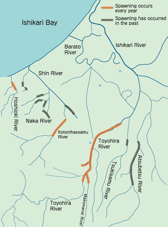 Sapporo Salmon Information