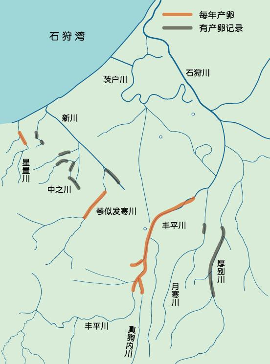 札幌的鲑鱼信息