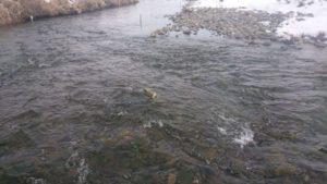 水穂大橋下流の水路
