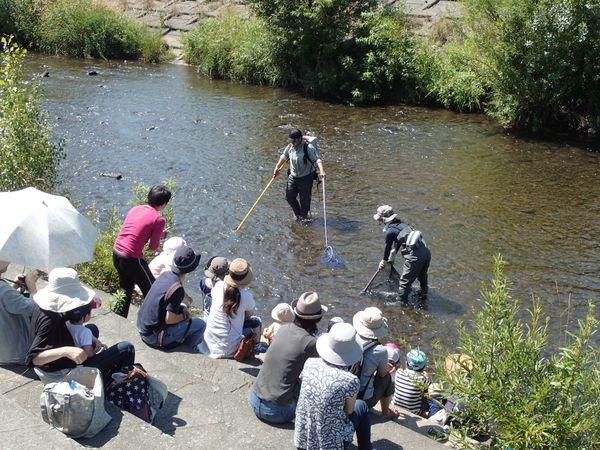 川のお魚観察会