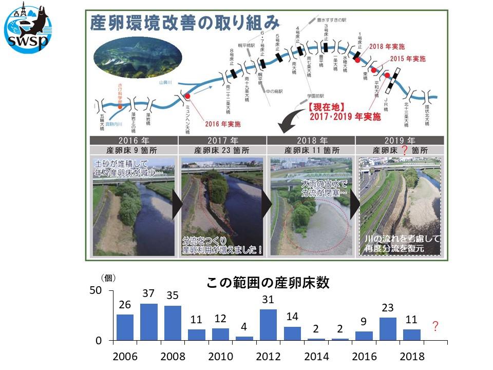 豊平川でサケの産卵環境改善工事が行われました