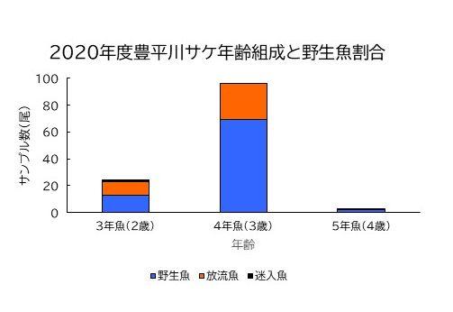 2020年度豊平川・真駒内川 サケ・サクラマス産卵床調査結果