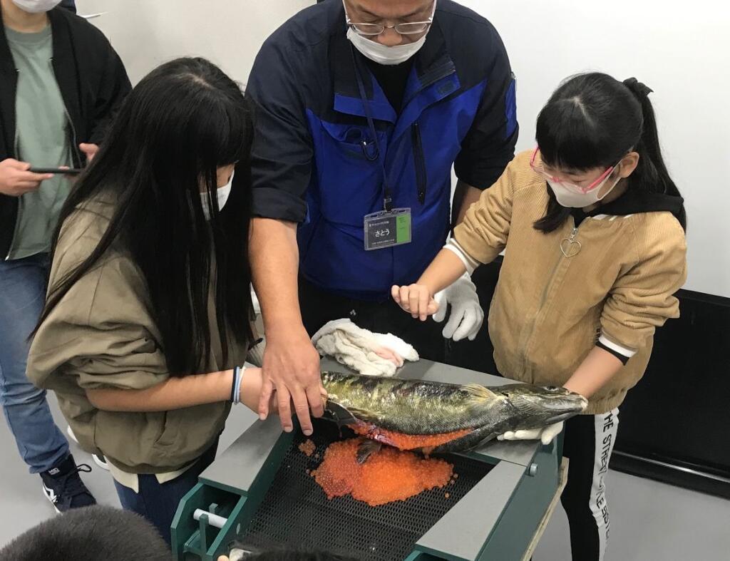 サケの採卵実習申し込み受付のイメージ